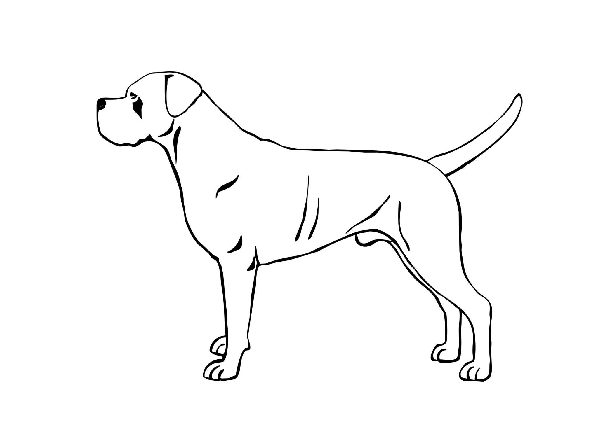 Standard del cane corso i corsi della valle di pietra - Immagini dei denti da colorare ...